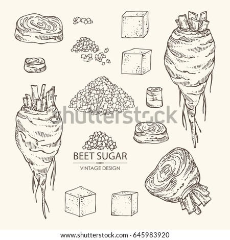 Collection of beet sugar: sugar and beet. Vector hand drawn illustration