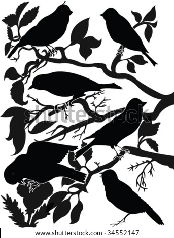 collection of birds on wood silhouette - vector