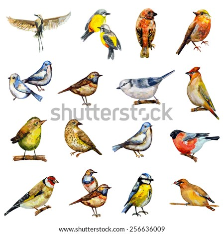 collection of birds watercolor