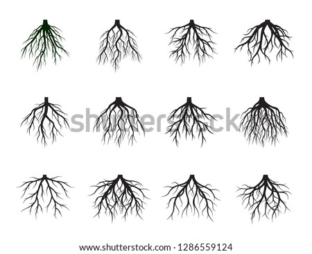 Collection of Black Root Tree. Vector Illustration. Plants and garden.