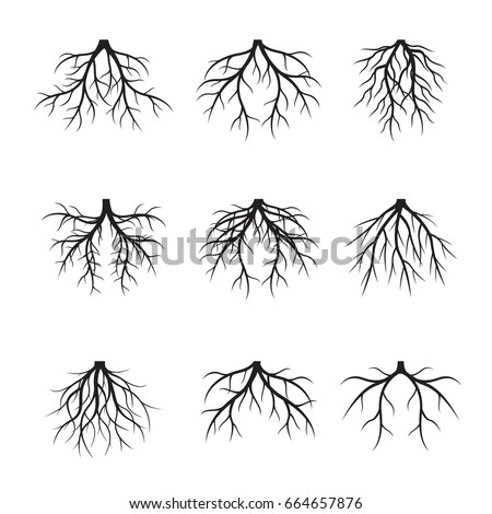 Collection of black Roots. Vector Illustration.