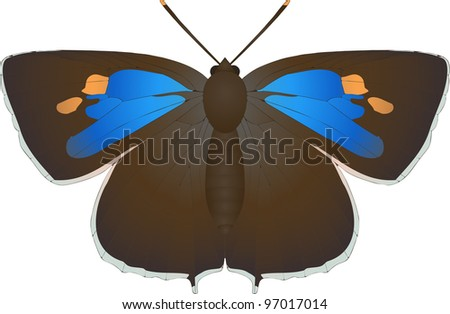 Collection of butterflies: Neozephyrus quercus Purple Hairstreak