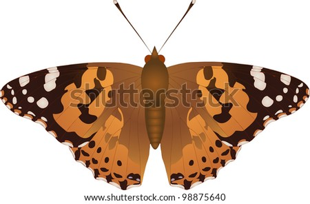Collection of butterflies: Vanessa cardui Painted Lady