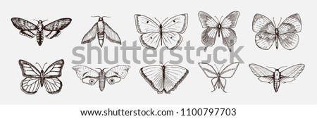 collection of butterfly or wild