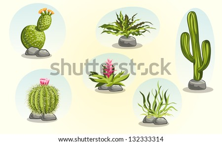 collection of cactus and desert