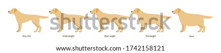 Collection of cartoon cute dog weight stages vector flat illustration. Colorful domestic animal different shapes with inscription isolated on white background. Set of plump scale doggy pet