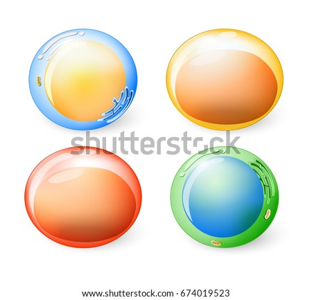 Collection of cells for your design. Set icons.  Four animal cells with Organelles: nucleus, mitochondria, golgi apparatus and Rough endoplasmic reticulum