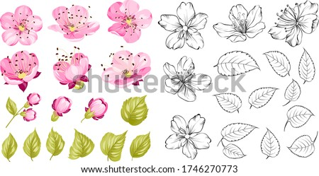 collection of cherry flowers
