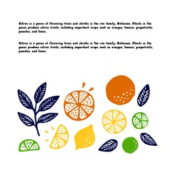 Collection of citrus fruits - orange, lemon, lime and leaves icons set, colorful isolated on white background, vector illustration.