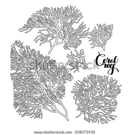 collection of corals drawn in...