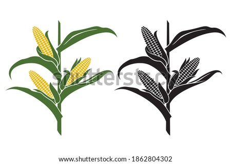 collection of corn stalk illustrations isolated on white background Stock photo ©