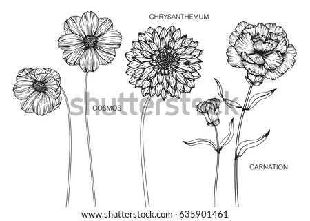 collection of cosmos  carnation