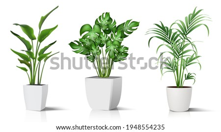 Collection of 3d realistic vector icon illustration potted plants for the interior. Isolated on white background. Photo stock ©