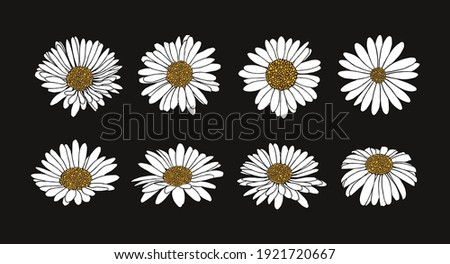 Collection of daisy flower with ink style vector  Stockfoto ©