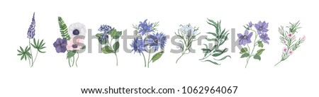 Collection of detailed drawings of trendy floristic flowers and decorative flowering plants isolated on white background. Bundle of elegant floral decorations. Colorful realistic vector illustration.