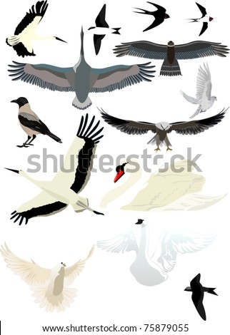 collection of different birds