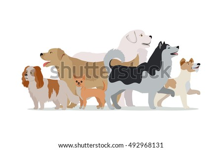 collection of different dogs