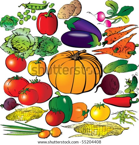 Collection of different vegetables on a white background. Vector art-illustration.