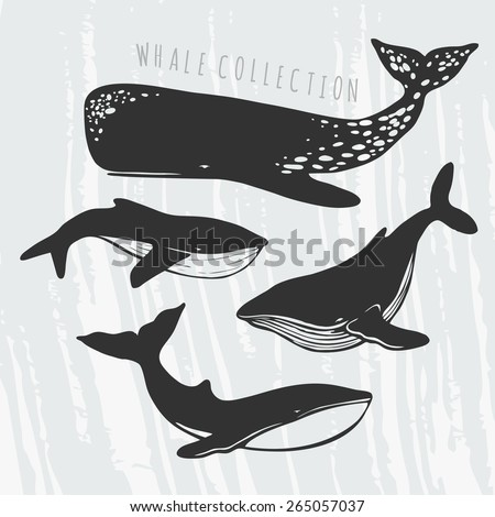 collection of different whales