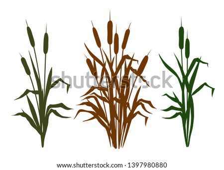Collection  of diverse silhouettes bulrush .   Clipart. Vector templates of various narrowleaf cattails. Illustration of nature.  Сток-фото ©