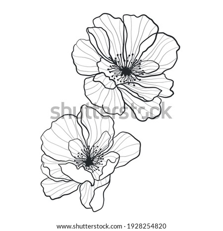 Collection of drawings of flowers with linear art on a white background. Vector hand illustration. One line Stock photo ©