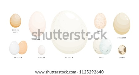 collection of eggs of various