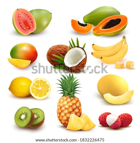 Collection of exotic fruit and berries. Papaya, guava, limon, banana, mango, coconut, kiwi, guava, melon, lychee, pineapple. Vector Set.