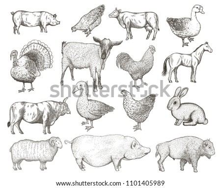 Collection of farm animals isolated on a white background. Hand drawn vector illustrations.