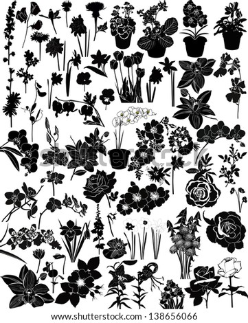 collection of flowers isolated