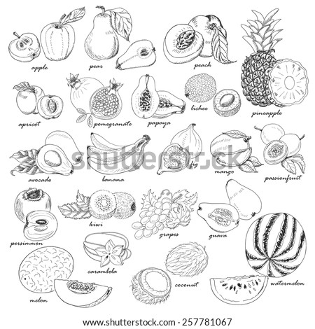 collection of fruit in sketch