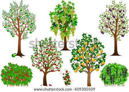 collection of fruit trees