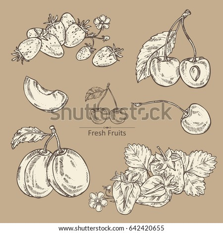 Collection of fruits and berries: cherry, plum, strawberries and strawberries. Hand drawn. #642420655