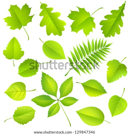 Collection of green leaves Vector