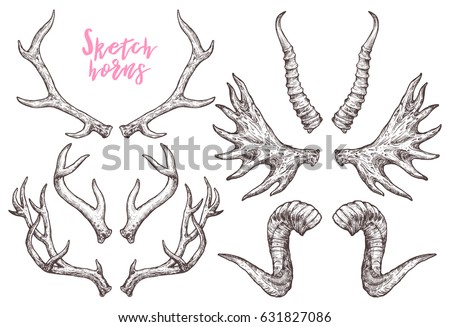 Collection Of Hand Drawn Different Animals Horns. Sketch Horns Of Deer, Antelope, Ram, Sheep, Elk. Boho And Rustic Illustration