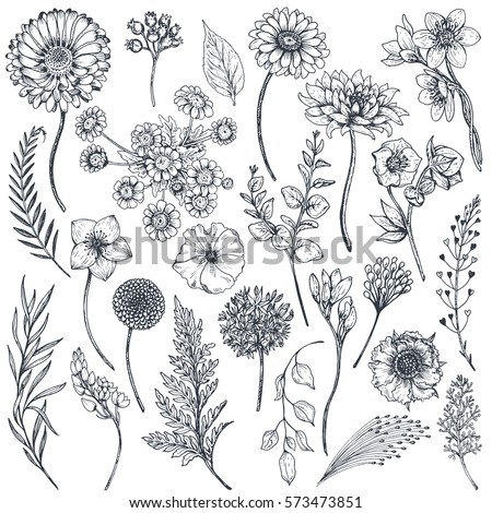 Collection of hand drawn flowers and plants. Monochrome vector illustrations in sketch style. #573473851