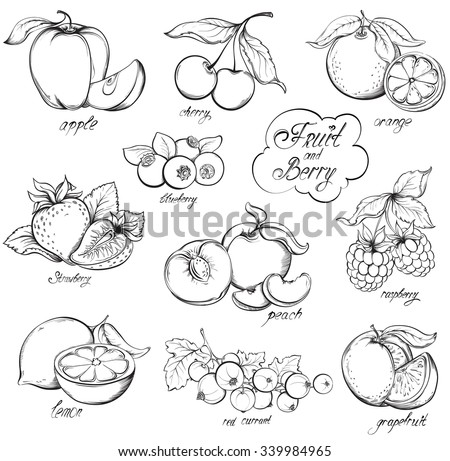 collection of hand drawn fruits