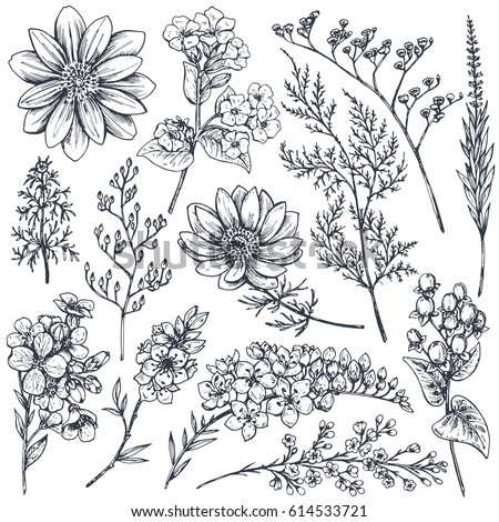 Collection of hand drawn spring flowers and plants. Monochrome vector illustrations in sketch style.