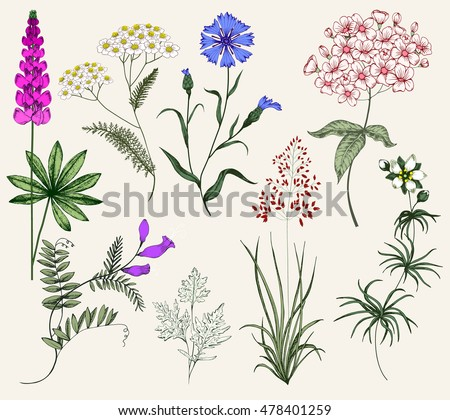 Collection of Herbs and flowers. Vintage floral Set. Colorful flower illustration, flower in the style of engravings. Herbs, Botany, Wild Flower, isolated flowers, vector flowers and herbs