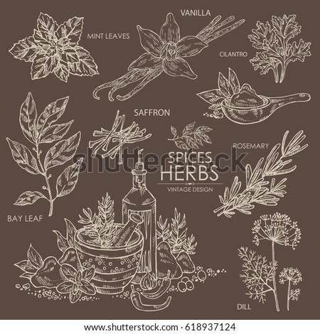 Collection of herbs and spice: vanilla, mint, bay leaf, cilantro, dill, saffron, rosemary. hand drawn.