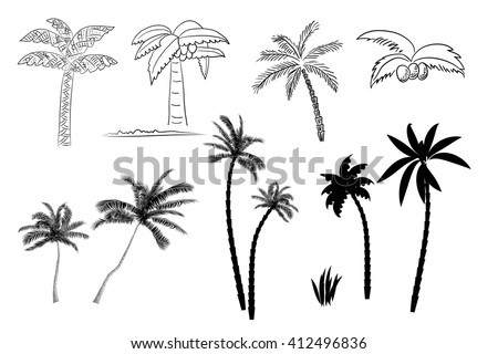 Collection of images of palm trees vector format. Line and silhouette of palm trees isolated on white background