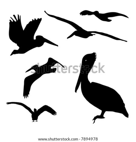 Collection of isolated Pelican silhouette designs in AI-EPS8 format.