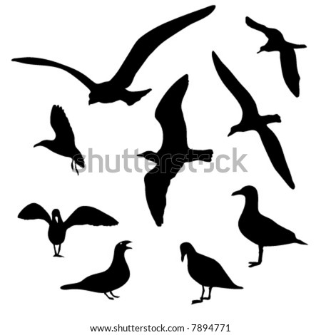 Collection of isolated seagull silhouette designs in AI-EPS8 format.