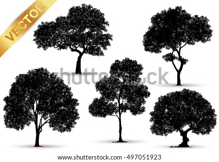 collection of isolated tree on