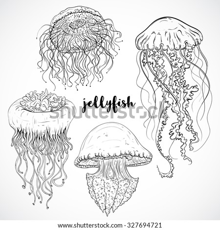Collection of jellyfish. Vintage set of black and white hand drawn marine fauna. Isolated vector illustration in line art style.Design for summer beach, decorations.