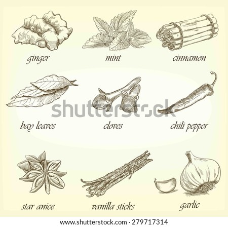 Collection of kitchen spices hand-drawn, vector illustration
