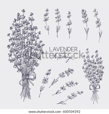 Collection of lavender. hand drawn #600504392