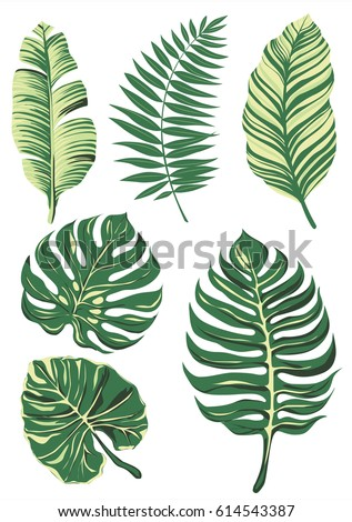 collection-of-leaf-set-leave-vector