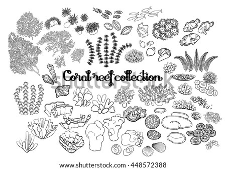 collection of ocean plants and
