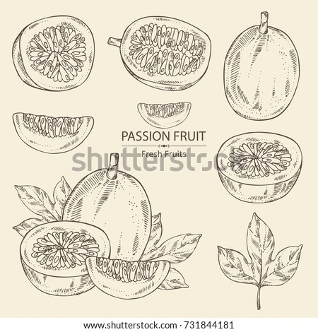 Collection of passion fruit: fruit, passion slice and leaves. Vector hand drawn illustration