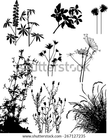 collection of plants and flowers